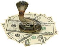 Фотография кобры над долларами США. Автор фото Игорь Веснинов