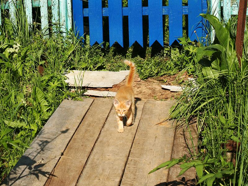 Рыжий котенок случайно забрел к нам на дачу и прижился на пару дней