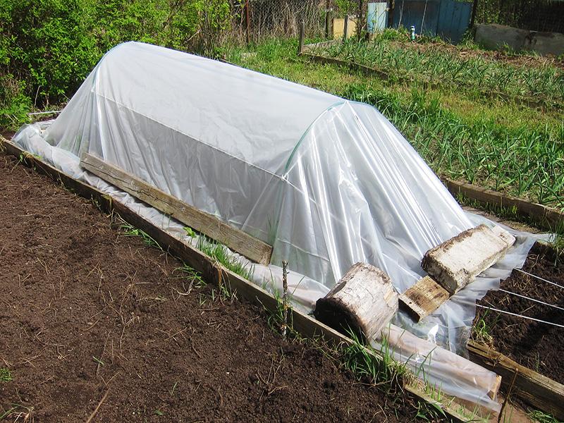 Конечно, с помощью парника можно раньше получить рассаду овощей