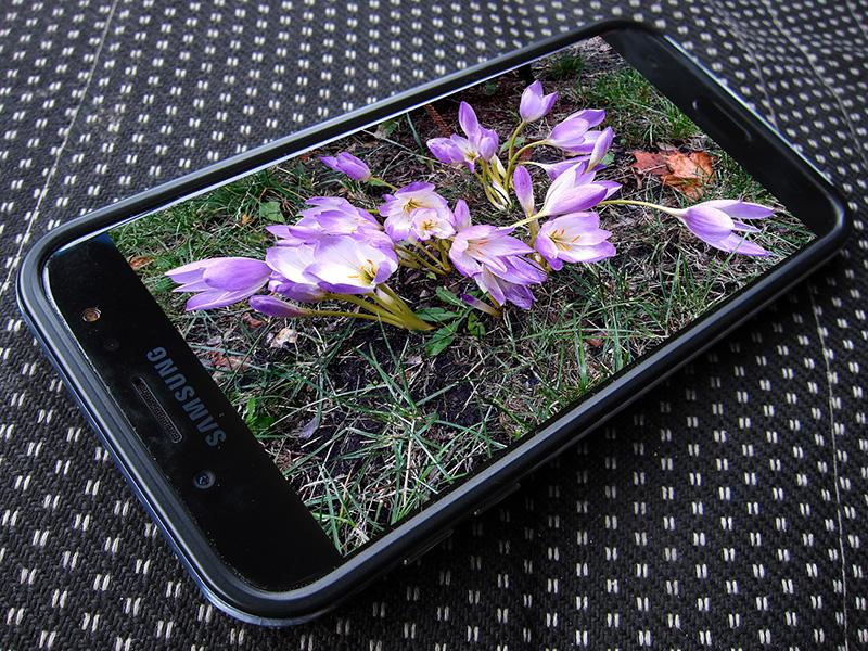Используя смартфон, мы получаем великолепные фотографии своих цветов на даче, овощей и фруктов. Иногда снимаемся сами.