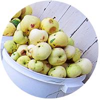 У нас на даче две яблони, с которых мы собираем плоды - одна на нашем участке, а вторая на заброшенном соседском. Причем втора гораздо вкуснее.