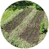 Овощеводство на нашей даче в Лотошинском районе началось с этой самой простой грядки