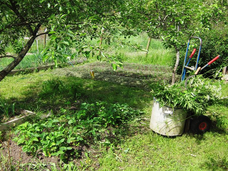 Фотография тачки, с помощью которой мы собираем на даче траву и потом перевозим ее туда, где необходимо произвести мульчирование почвы.