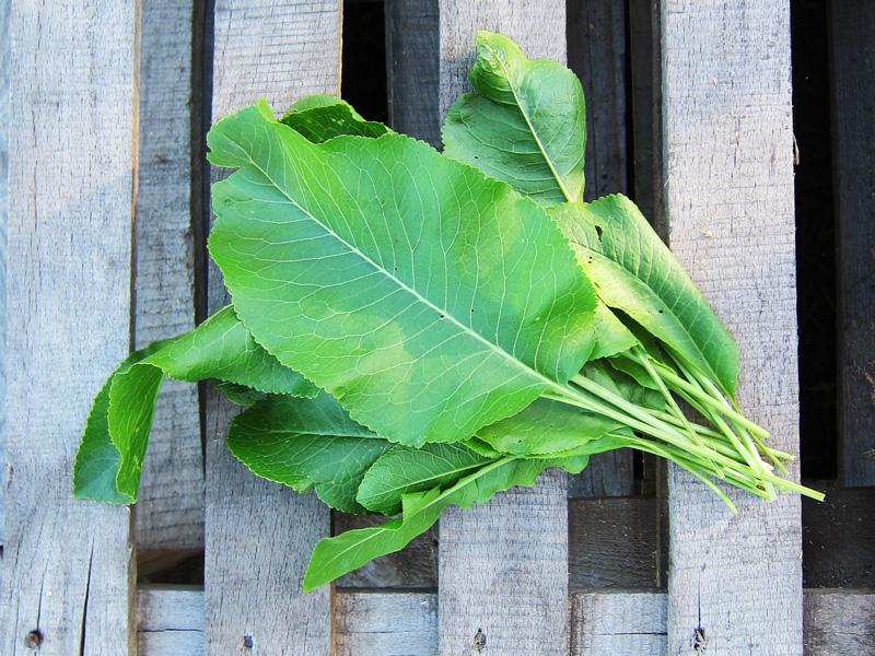 Сколько мы срываем листьев хрена, но они постоянно вырастают вновь там, где их не просят