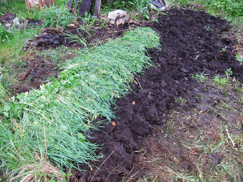 Для защиты от сорняков по краю грядки я выложил траву толстым слоем