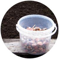 Посадка чеснока осенью под зиму - когда и как правильно посадить его на дачных грядках?