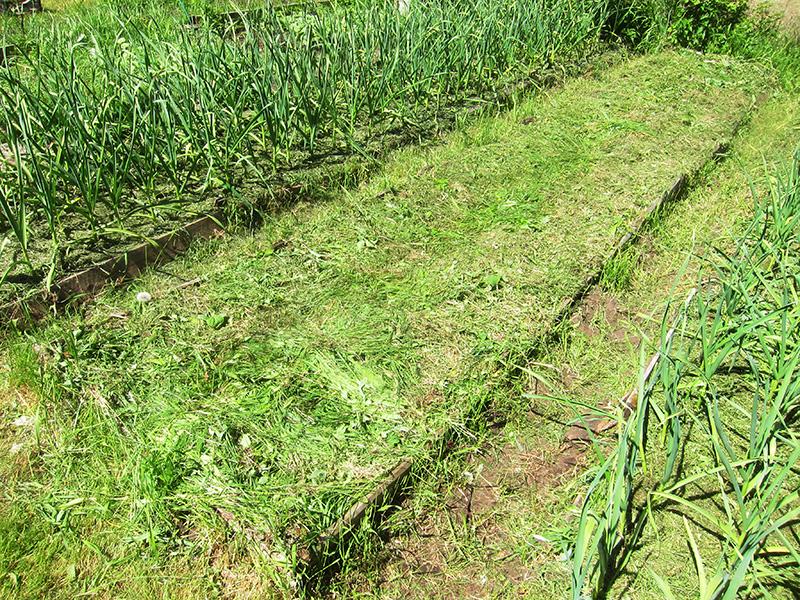 Свежести травы, которую мы использовали в качестве мульчи, должно хватить на две недели. А потом добавим свежую.