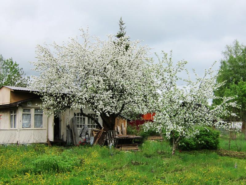 Фотография дачи майской весной