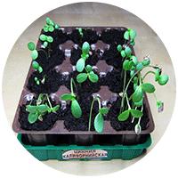 Возможно, когда-то мы повторим этот опыт, но пока нацелены на другие варианты выращивания рассады