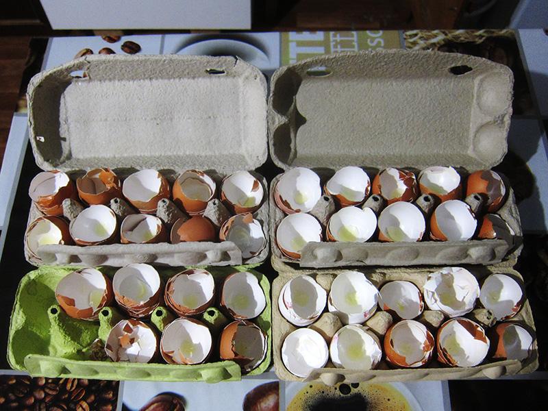 Разбив яйца, мы кладем скорлупу обратно в ячейки, где она сохнет