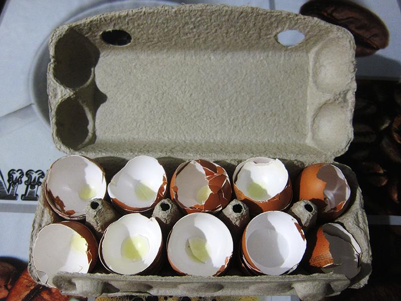 Высохшая яичная скорлупа подвергается последующему измельчению