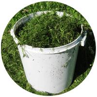 Мы на своем дачном участке ежегодно используем скошенную траву для защиты овощных грядок от пересыхания и разрушения почвы.
