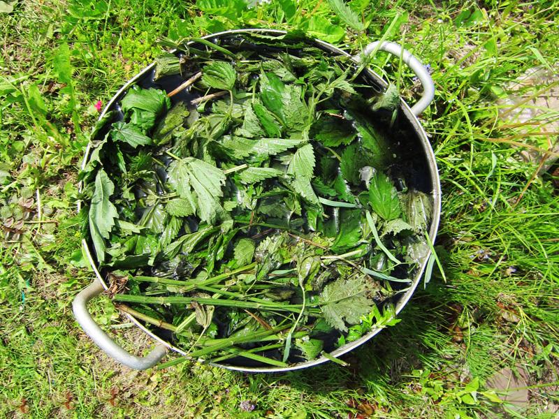 Настой из листьев и стеблей крапивы полезен многим овощным культурам на дачном участке или в огороде усадьбы