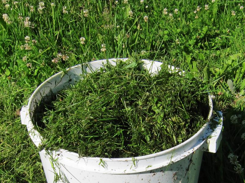 Мы давно на овощных грядках своей дачи рассыпаем скошенную траву в качестве мульчи