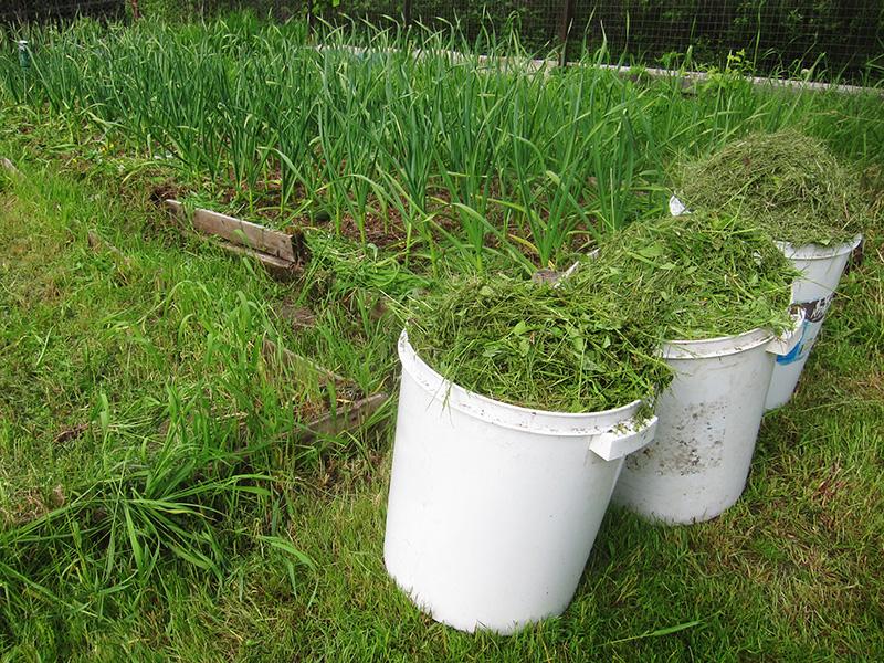 В одно большое пластиковое ведро помещается скошенная трава из трех или даже четырех бункеров газонокосилки