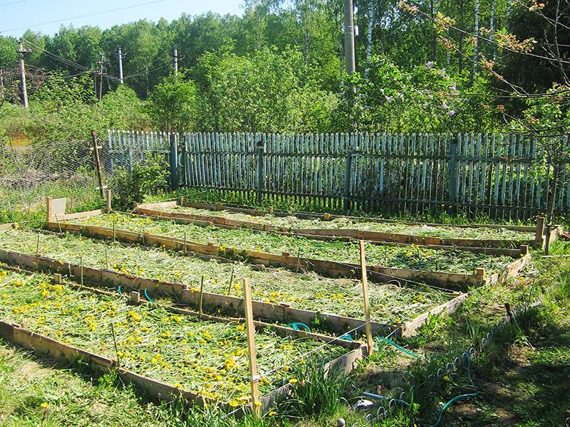 Оставленная на земле трава сохраняет влажность почвы и отдает ей свои полезные вещества