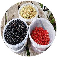 У нас на дачном участке пока три виа смородины - черная, красная и белая.