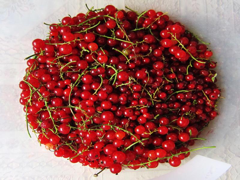 Фотография ягод красной смородины, собранных у нас на даче