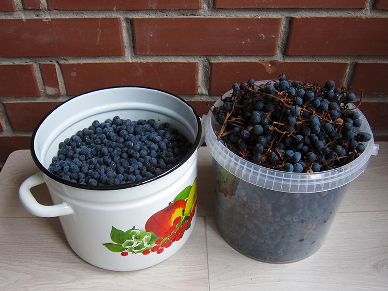 На обработку виноградных гроздей ушло полдня