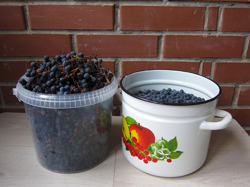 Урожай винограда, который собран в сезоне 2021 года, уже переработан и отправлен в бутыль на брожение