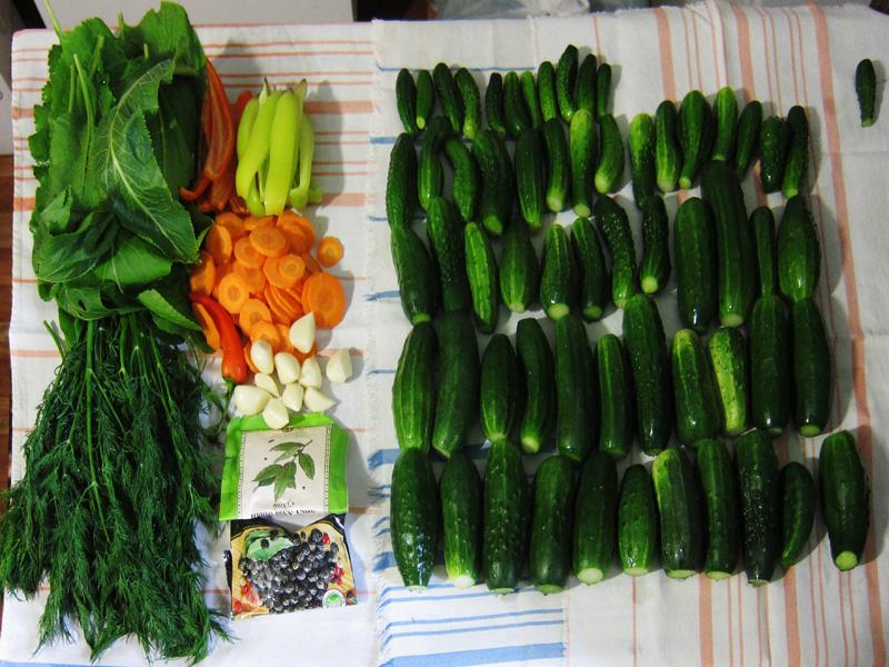 При консервировании огурцов необходимо тщательно вымыть подготовленные овощи и приправы, а также банки и крышки, которые обязательно стерилизуются