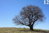 Одинокое дерево растёт высоко в горах над Верхней Марой. КЧР.