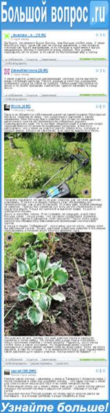 Ответьте на сайте «Большой Вопрос», растет ли хоста на солнце или ей гораздо лучше живётся в тени высоких трав, которых предостаточно на дачных участках?