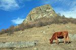 Корова пасётся в карачаевских горах - над аулом Нижняя Мара