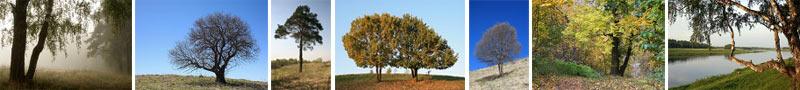 Мои фотографии деревьев, вошедшие в Альбом «Жизнь деревьев»