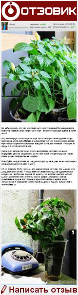 Семена перца кустарникового СеДеК «Аладдин» - Отличная всхожесть в первом пакете и не понятно что выросло в следующий раз