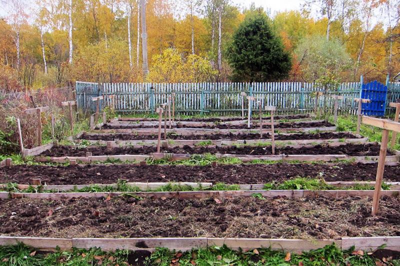 Фотография маленького дачного участка с грядками в Московской области, Россия