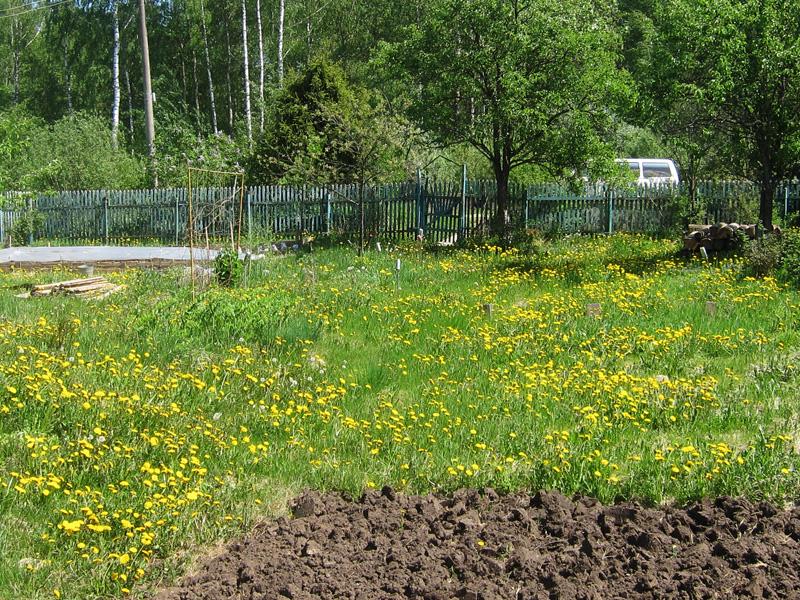 Газонокосилкой удаляется трава с дачных газонов