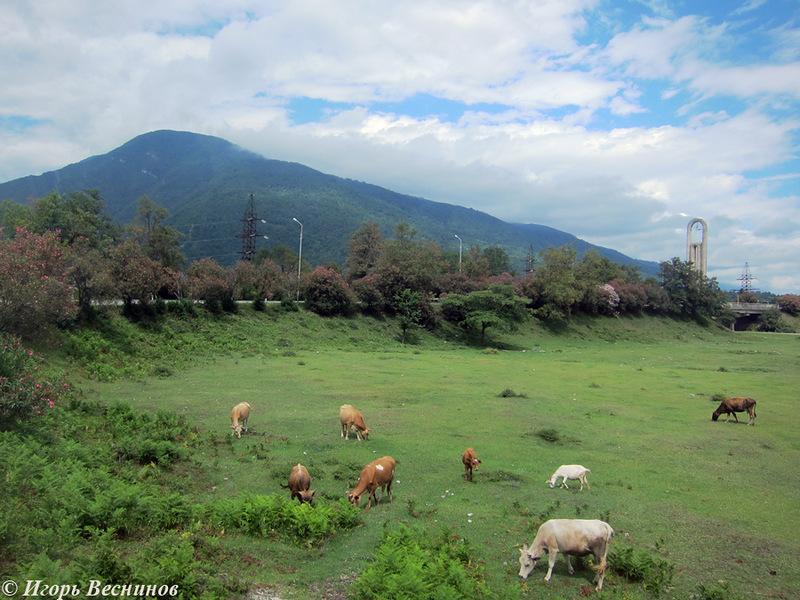 Моё первое однодневное путешествие в Абхазию