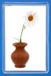 Нивяник (садовая ромашка) (leucanthemum). Нивяник более известен как ромашка,          только это ромашка не полевая, а садовая. Отличается исключительной красотой.          Нивяник высаживают в групповых и одиночных посадках, на газонах, на бордюрах,          в миксбордерах и т.д. Варианты использования этого растения в декоративных посадках          садовых цветов очень разнообразны.         Нивяник — многолетнее растение, цветущее продолжительно и обильно. Цветёт с июня до          конца августа. Есть сорта, зацветающие в конце мая. Высота стеблей 60-100 см.          Соцветия могут быть размером до 15 см. Центр соцветия жёлтый, крупные белоснежные          лепестки располагаются в 1-2 ряда. Растение морозостойкое и светолюбивое