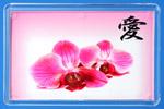 Цветы орхидеи и иероглиф Любовь.